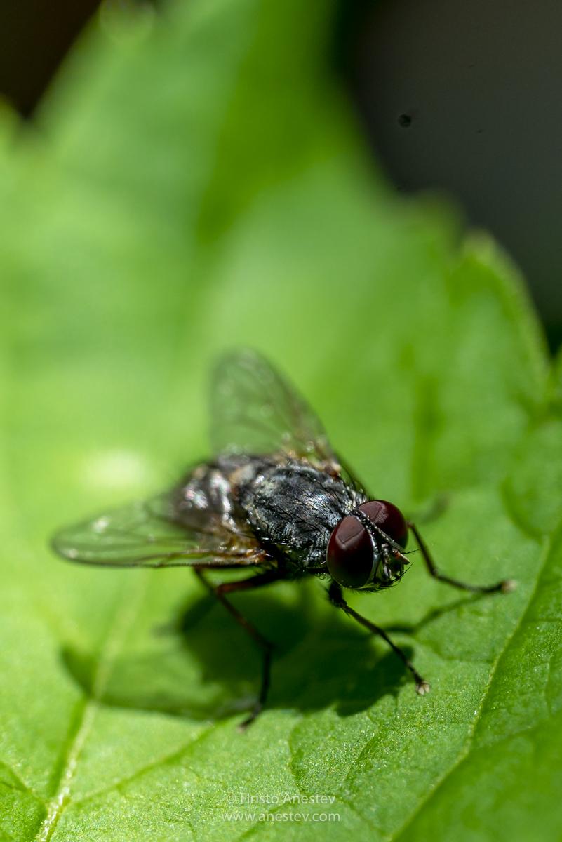 Макро фотография насекоми