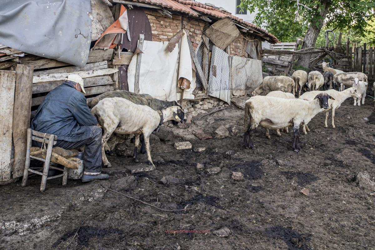 Село Индже Войвода
